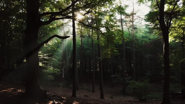Deep in the forest Aerial shot deep inside the forest in Aarhus. scandinavia stock videos & royalty-free footage