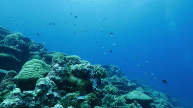 vídeos y material grabado en eventos de stock de arrecife de coral del mar profundo - zona pelágica