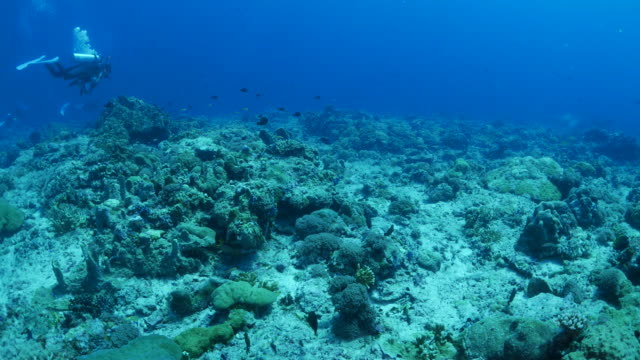 Deep sea coral reef video