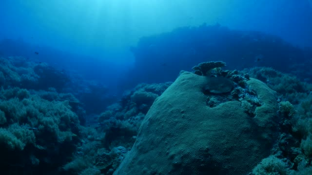 Deep sea coral reef Underwater, Palau - May 28, 2017 : Scuba diving undersea (2017_0520_0531-0528_1032_A) ocean floor stock videos & royalty-free footage