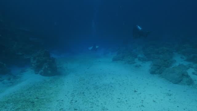 vídeos y material grabado en eventos de stock de alta mar, buceo, palau - micronesia
