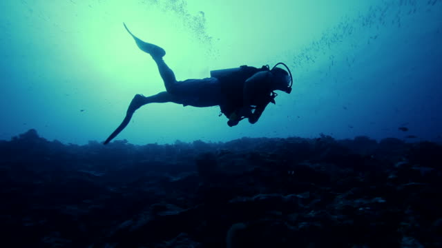Deep sea scuba diving in the Pacific Ocean Deep sea scuba diving in the Pacific Ocean. Scuba Diver in silhouette against the surface 40 meters above. scuba diving stock videos & royalty-free footage