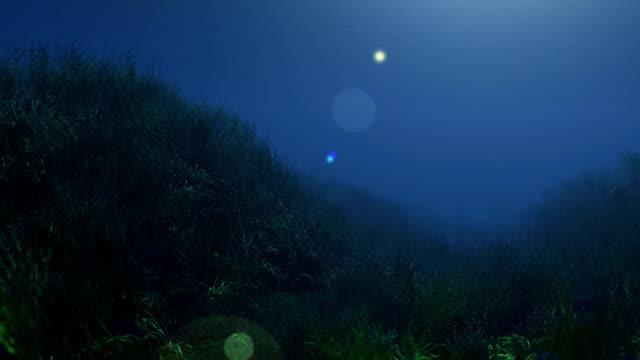 vídeos de stock e filmes b-roll de profundidade subaquática relva - oceano pacífico