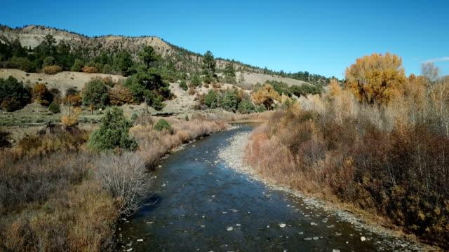 deer crossing river in colorado by drone - jelonek filmów i materiałów b-roll