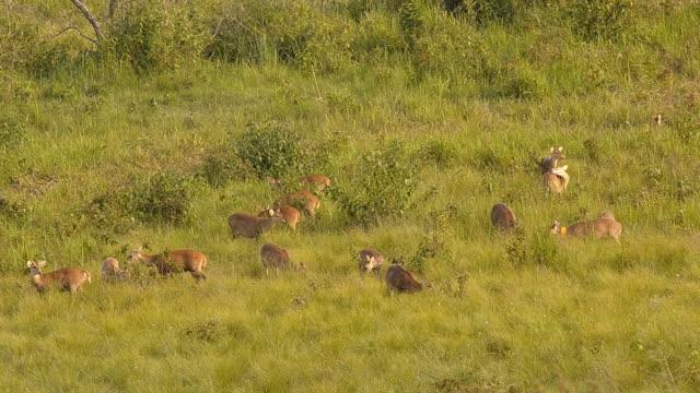 deer family video