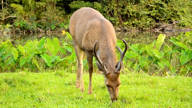 Deer grazing in field Deer grazing in field animal whisker stock videos & royalty-free footage