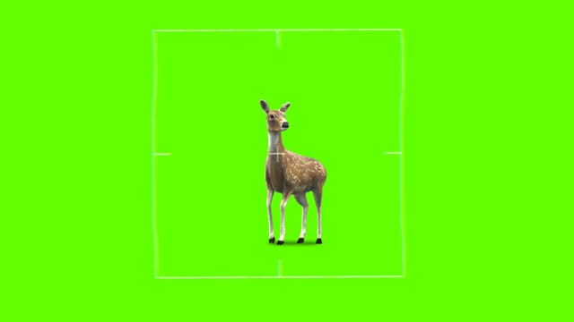 Deer Hunting target for shooting on Green Screen Background 4k Animation.
