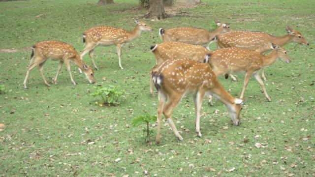 Deer in grass field