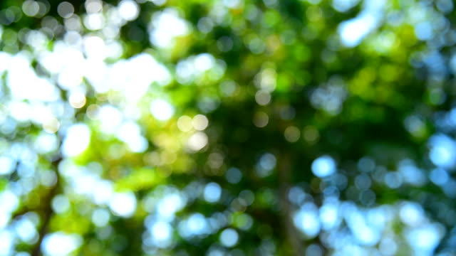 Defocused abstract nature background with leaves and bokeh lights. video