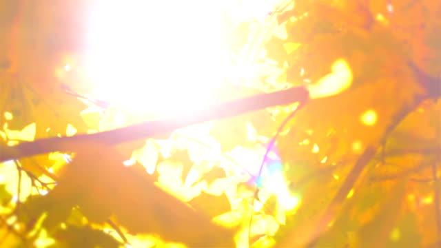 Defocused Autumn Leaves and Sun video