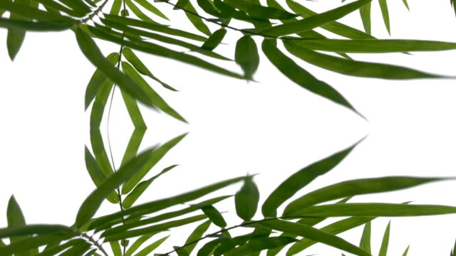 defocused ,Surreality abstract motion graphics ,bamboo leaf
