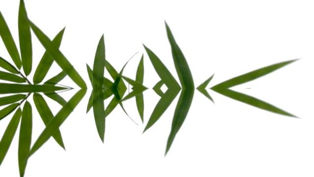 vídeos de stock, filmes e b-roll de gráficos em movimento abstrato desfocados, surrealidades, folha de bambu - nervo digital