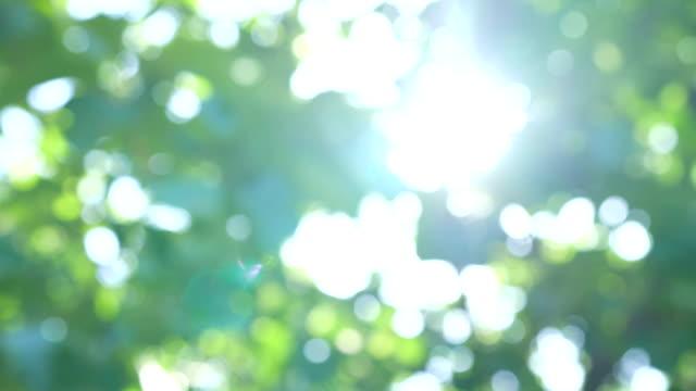 多重ツリーと太陽をパンします。 - 木漏れ日点の映像素材/bロール