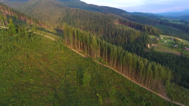 vídeos de stock e filmes b-roll de deforestation. aerial drone view of forest destroyed in ukraine. - desertificação