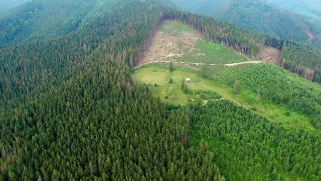 vídeos de stock e filmes b-roll de deforestation. aerial drone view of forest destroyed ukrainian carpathians - desertificação