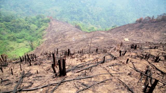 Deforestation, after forest fire, natural disaster video