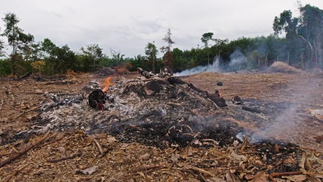vídeos de stock e filmes b-roll de deforestation burning forest to clear land - cinza