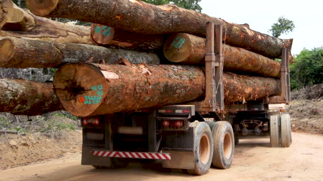 Deforestation in Amazon Rainforest - Felling hardwood timber Deforestation in Amazon Rainforest - Felling hardwood timber durability stock videos & royalty-free footage