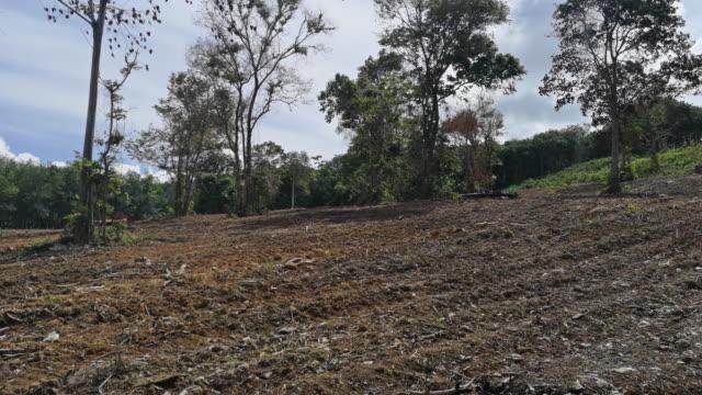Entwaldung von Landrodungen umweltschäden – Video