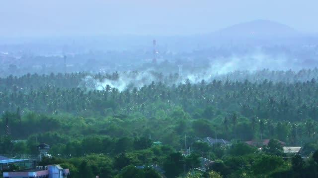 vídeos de stock e filmes b-roll de deforestation. logging and burning rainforest. forest fire envrionmental problem - oleo palma