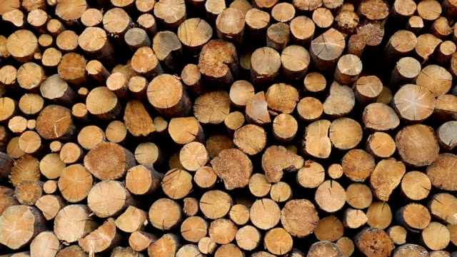 stockvideo's en b-roll-footage met deforestation lumber industry - boomstam