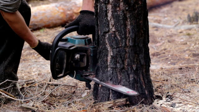 deforestation. lumberjack is sawing tree chainsaw. - motosega video stock e b–roll