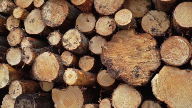 vídeos y material grabado en eventos de stock de deforestación madera de la industria maderera - diseño natural