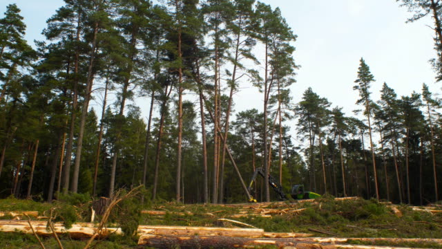 deforestation - albero caduto video stock e b–roll