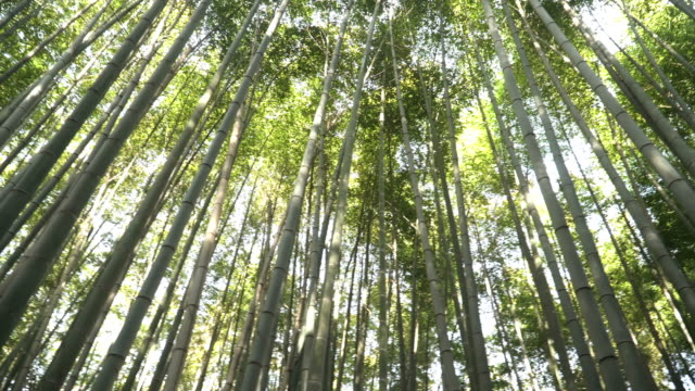 360 degree view in Arashiyama Bamboo Forest in Kyoto, Japan video