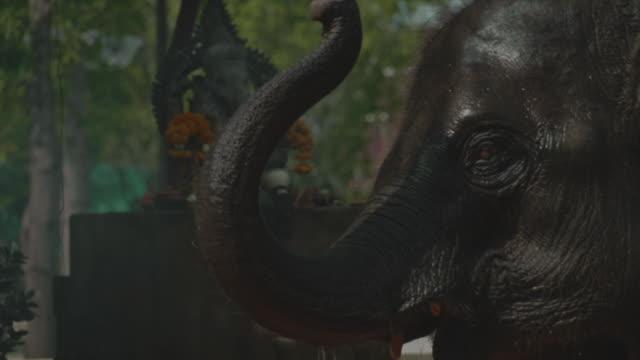 vídeos de stock, filmes e b-roll de divindade de ganesha - ano novo budista