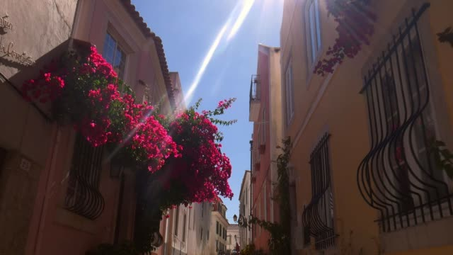 Deliberate sun flares through purple bougainvillea flowers Slow motion reveal of deliberate sun flares through purple bougainvillea flowers in Cascais, Portugal portugal stock videos & royalty-free footage