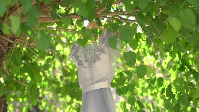 delicate bridesmaid dress with a bodice embroidered with beads and a satin belt hanging on the green branches of a tree on a sunny day