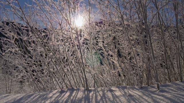 zarte eisig gefrorene buschzweige in der morgensonne. winter im berg. schatten fallen auf weißen schnee. uhd, 4k - schneeflocke sonnenaufgang stock-videos und b-roll-filmmaterial