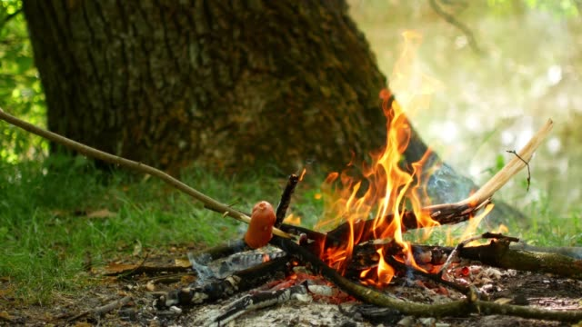delicious sausage roasted on the campfire in the summer forest video