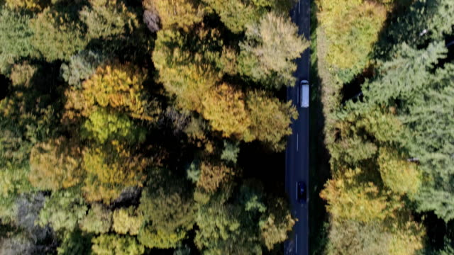 Delivery Van Driving on Forest Road in Autumn Drone point of view shot made in 4K/Ultra High Definition vänskap stock videos & royalty-free footage