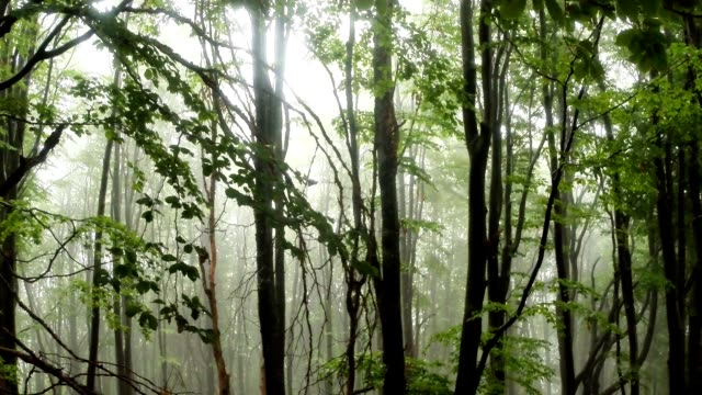 Dense Fog Descended on a Wooded Mountainside in the Mountains video