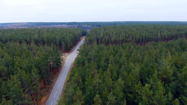 Dense forest with swamp and high voltage power lines. Aerial top view. Electrical energy goes through dense, heavy areas video
