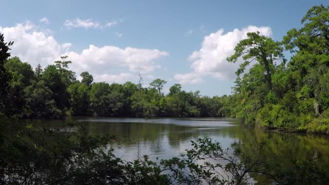 dense swampland - побережье мексиканского залива сша стоковые видео и кадры b-roll
