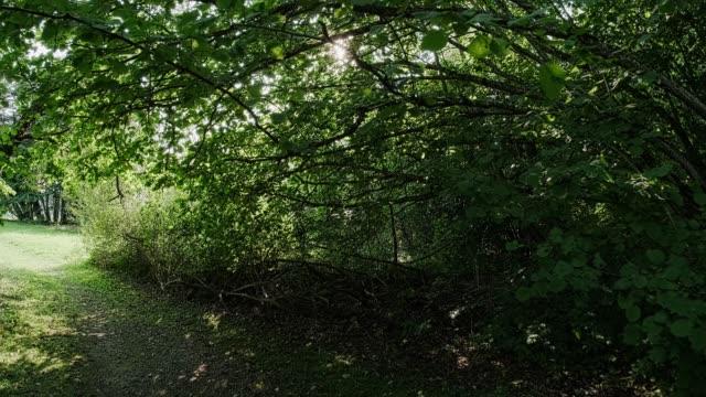 dichtes dickicht in einem laubwald. die zweige des baumes sind über den pfad gebogen. sonne blenden. - verbogen stock-videos und b-roll-filmmaterial