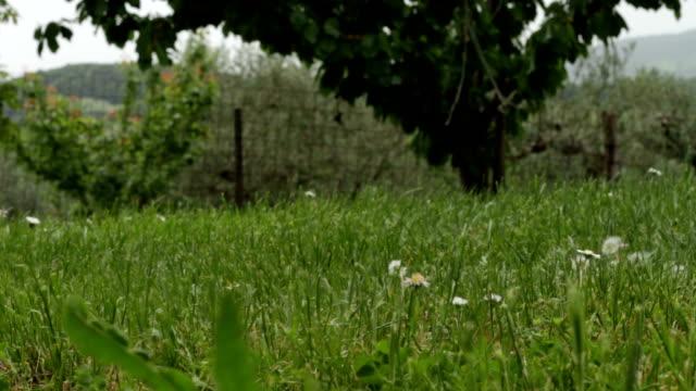 写真や航空ビデオのための高解像度のデジタルカメラとdjiファントム3クアドロコプタードローンの草から出発。 - コントロール点の映像素材/bロール