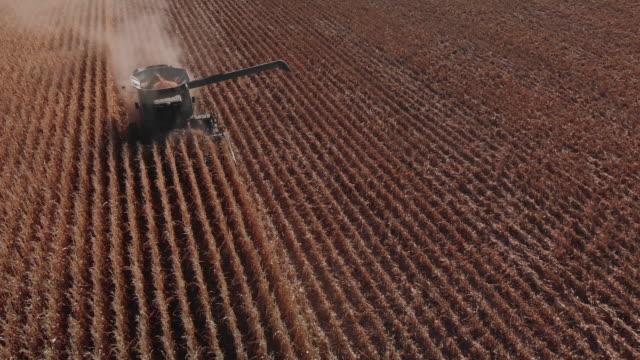 absteigende aerial drone schuss von einem mähdrescher mit einer schnecke, fahren durch ein feld von mais bei der ernte - nutzpflanze stock-videos und b-roll-filmmaterial