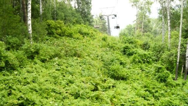 nedstigning från ett berg på en linbana, långsam rörelse längs träd i en oframkomlig snår, altai, ryssland, hd-video - lucia bildbanksvideor och videomaterial från bakom kulisserna