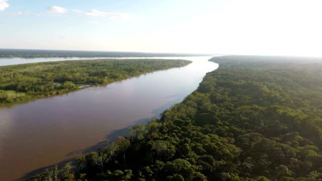 Descent through canopy of jungle trees, Peruvian Amazon, Peru video