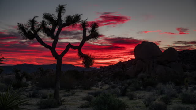TIME LAPSE: Desert at Sunrise - Joshua Tree National Park, California