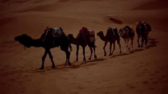 desert caravan. camels - колонна стоковые видео и кадры b-roll
