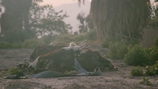 Desert Dead Cow Carcass 4K 48FPS SLO-MO Dead cow carcass rotting in the California Desert sun. dead animal stock videos & royalty-free footage