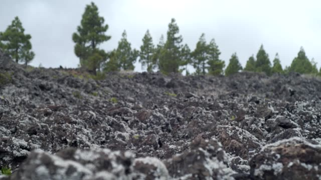 Desert landscape of a cooled lava covered with moss and lichen