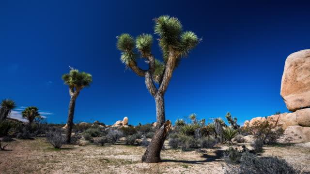 ジョシュア ツリー国立公園、アメリカ合衆国 - トラッキング ショットでの時間の経過: 砂漠風景 - ジョシュアツリー国立公園点の映像素材/bロール