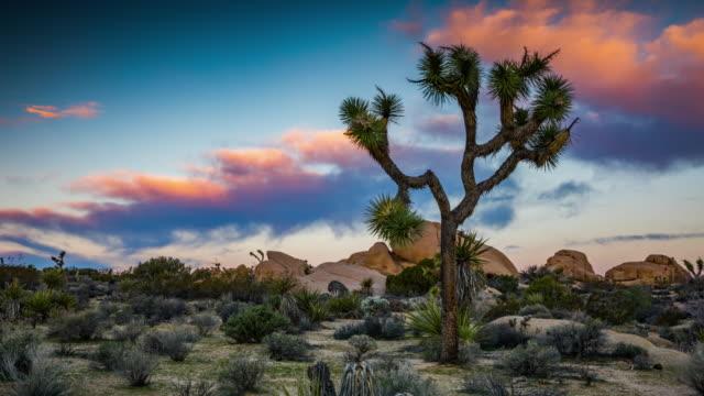 日の出 - 4 k 自然/野生動物/天気ジョシュア ツリーと時間の経過: 砂漠の風景 - ジョシュアツリー国立公園点の映像素材/bロール