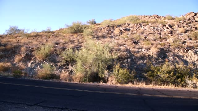 砂漠の砂漠の道。 - オコティロサボテン点の映像素材/bロール
